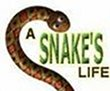 A Snakes Life download