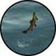 FlySim  download